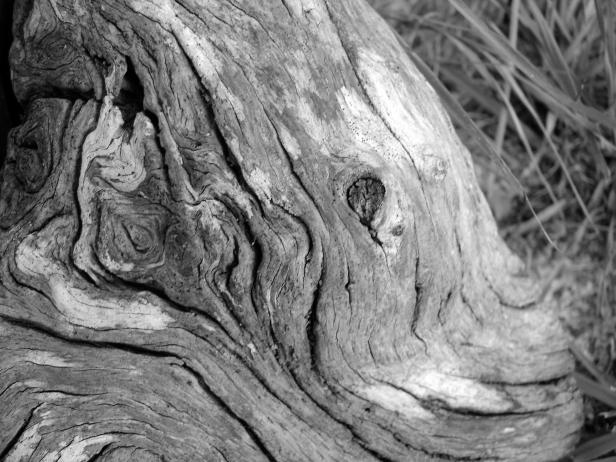 firewood c