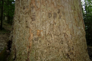 Past visitors have left their mark on the old tree