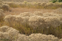 Gorgeous grasses