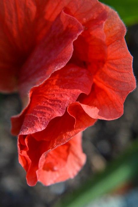 folded hibiscus