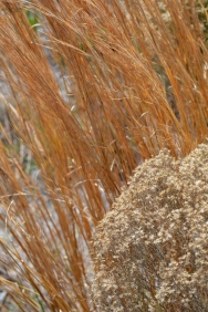grasses (3)
