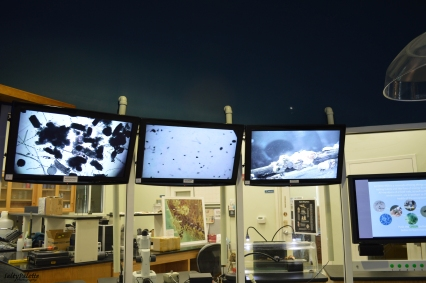 Each screen was attached to a microscope for real-time viewing of barnacles and other small sea-life
