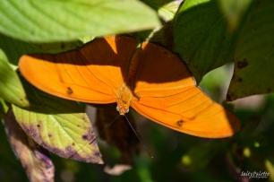 Naples BG Butterflies (10)