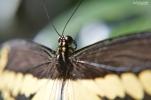 Naples BG Butterflies (12)
