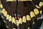 Naples BG Butterflies (14)
