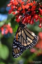 Naples BG Butterflies (1)