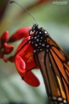 Naples BG Butterflies (3)