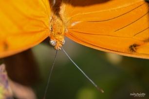 Naples BG Butterflies (9)