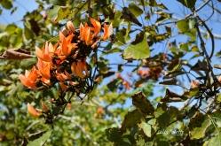 Naples Botanical Garden II (15)