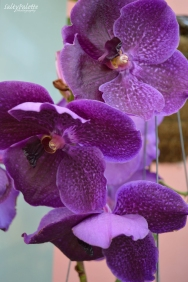 orchids NBG (3)