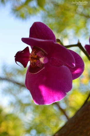 orchids NBG (5)