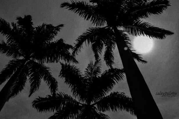 palm noir