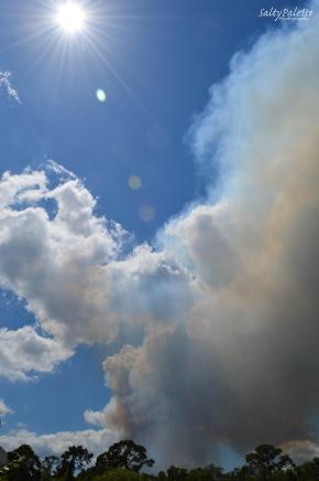smoke plume (1)