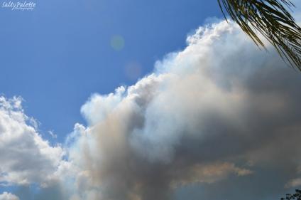 smoke plume (3)