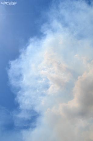 smoke plume (4)