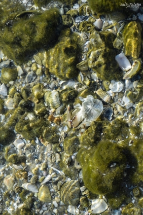 remnants of a crab in the water among the rock and shell