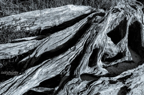 shore stump